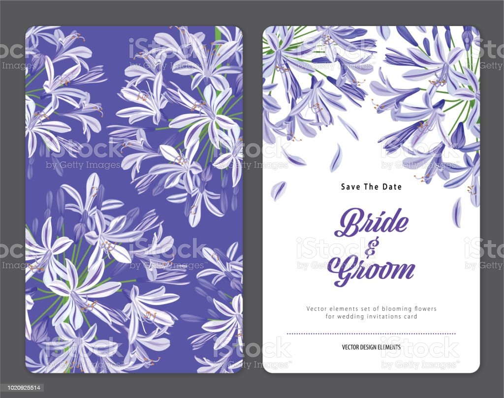 Agapanthus or African lily flowers background template. vector art illustration