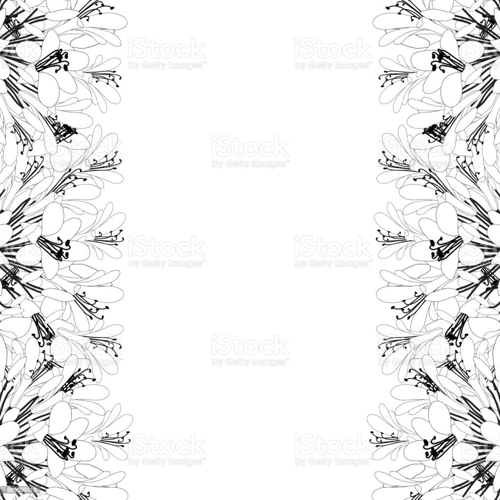 Agapanthus Outline Border - Lily of the Nile, African Lily vector art illustration