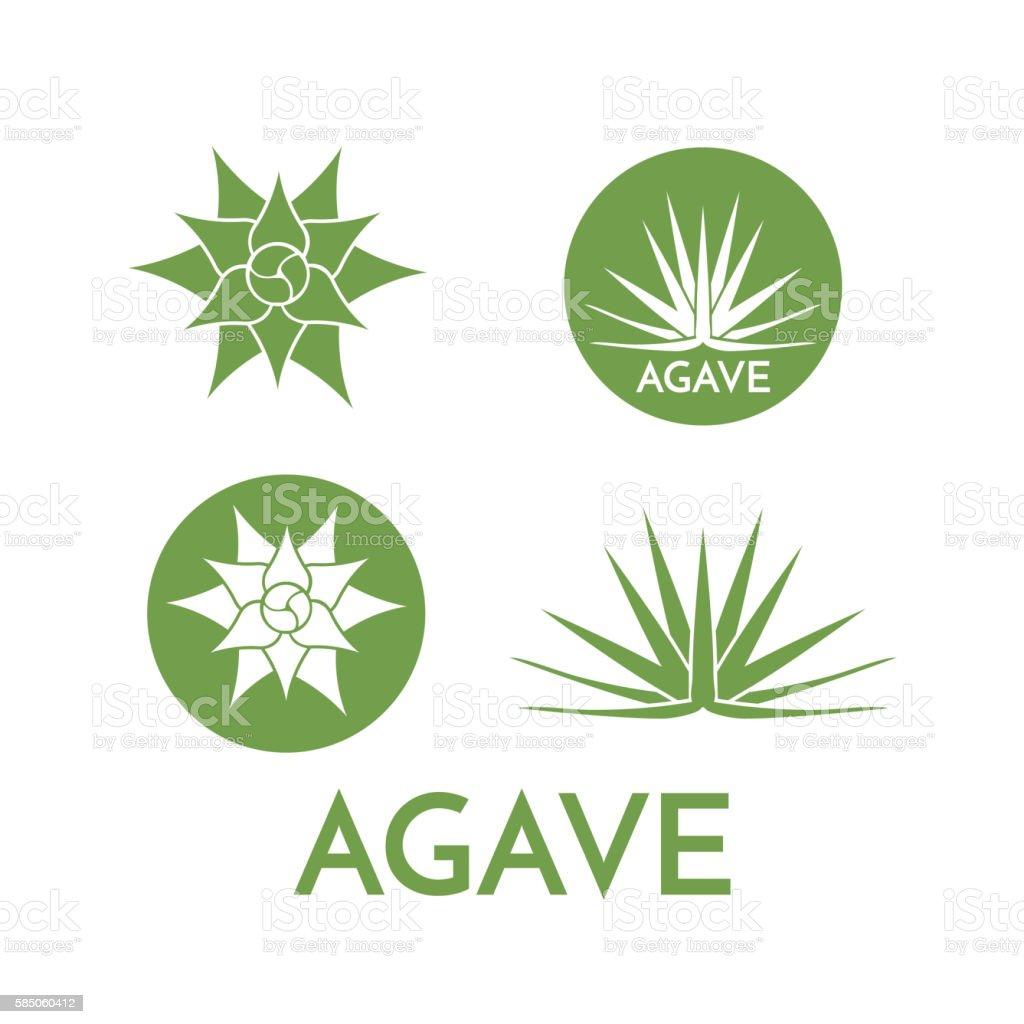 Agave plant green flower logo colorful vector illustration - ilustración de arte vectorial