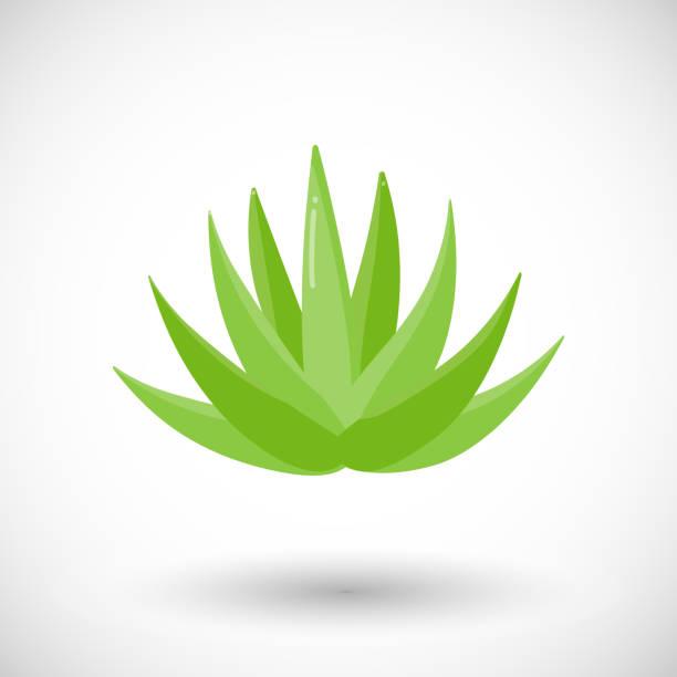 Agave plant vector flat icon vector art illustration