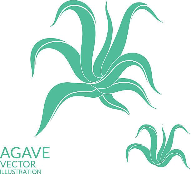 Agave - ilustración de arte vectorial