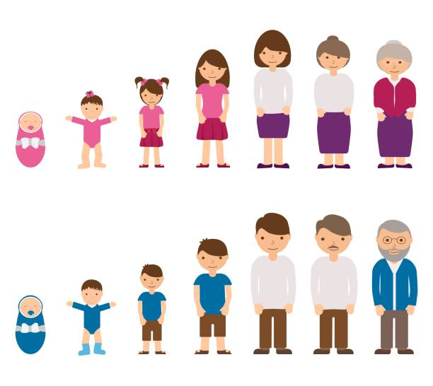 aging concept of male and female characters - baby, child, teenager, young, adult, old people. cycle life of man and woman from childhood to old age. vector illustration - maluch stock illustrations