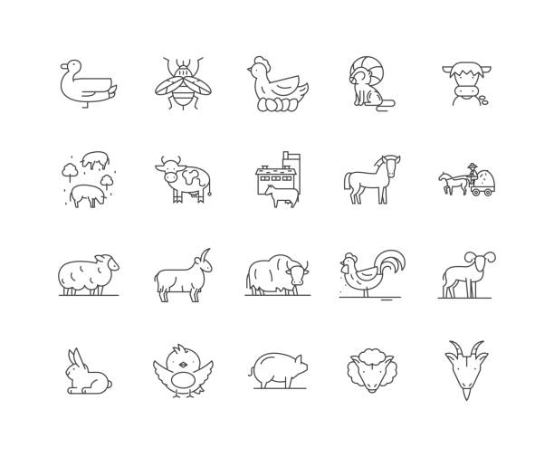 Agricultural animals line icons, signs, vector set, outline illustration concept Agricultural animals line icons, linear signs, vector set, outline concept illustration ducking stock illustrations