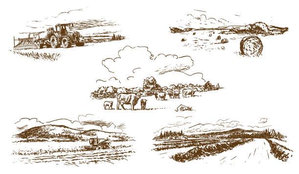 agricultural countryside landscape vector art illustration