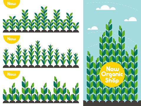 Agricultural crop pattern and organic food shop logo. Flat style vector concept for locally grown bio product