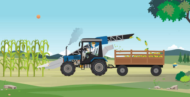 Agricultural harvesting Farmers are harvesting agricultural products using machines. corn crop stock illustrations