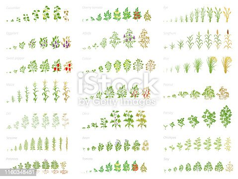 Agricultural plant, growth set animation. Cucumber tomato eggplant pepper corn grain and many other. Vector progression growing plants. Growth stages planting flat stock clipart.