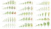 Agricultural plant, growth set animation. Cucumber tomato eggplant pepper corn grain and many other. Vector showing the progression growing plants. Growth stages planting flat stock clipart.