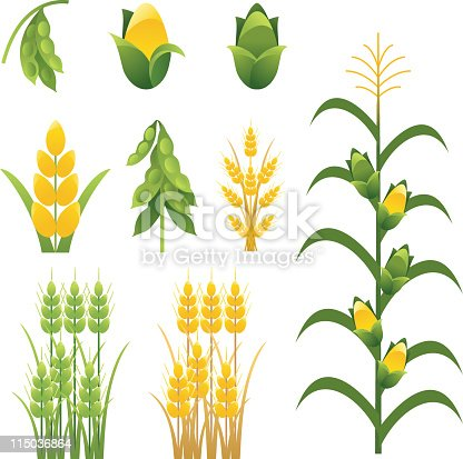 Agriculture Icons including soybeans, corn and wheat. The set includes individual  and groupings of plants and crops of corn,soy bean and wheat stalks.  The set is done in greens and yellow. Cornstalk has tassel and corn cobs.