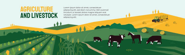 Agriculture, farming and livestock illustration Background for agriculture or livestock company. Vector illustration of farm land, cows and horse in pasture, tractor on hayfield. Corn field, farming in countryside. Template for banner, print, flyer agricultural cooperative stock illustrations