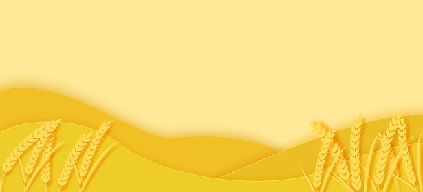 Agriculture field with spikelets of wheat and hills in papercut style. 3D autumn landscape with yellow paper cut meadow. Creative vector illustration of environmental conservation and farm concept.