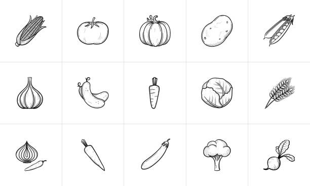Agriculture food sketch icon set Agriculture food sketch icon set for web, mobile and infographics. Hand drawn Agriculture food vector icon set isolated on white background. radish stock illustrations