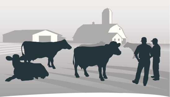 Agriculture: Looking over the herd.