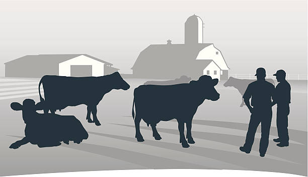 Agriculture: Looking over the herd. Farmers inspecting a dairy herd. farmer stock illustrations