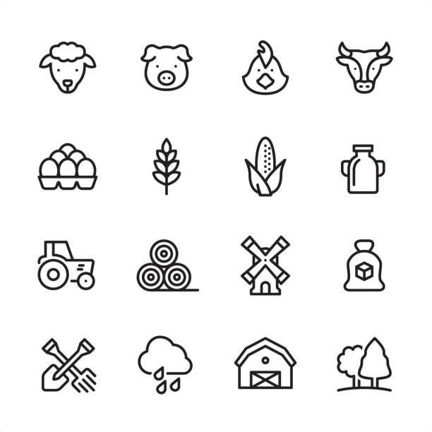 Agriculture - outline icon set 16 line black on white icons / Set #45 / Agriculture and Farm Pixel Perfect Principle - all the icons are designed in 48x48pх square, outline stroke 2px.  irst row of outline icons contains:  Sheep, Pig, Chicken, Cow;  Second row contains:  Eggs in stack, Wheat, Corn Crop, Milk;  Third row contains:  Tractor, Haystack, Windmill, Sugar Bag;   Fourth row contains:  Crossed Shovel and Rake, Rain, Barn, Forest.  Complete Inlinico collection - https://www.istockphoto.com/collaboration/boards/2MS6Qck-_UuiVTh288h3fQ poultry stock illustrations