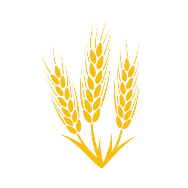 tarım buğday sembolü şablonu. vektör çizim - buğday stock illustrations