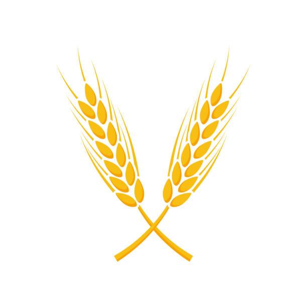 ilustrações de stock, clip art, desenhos animados e ícones de agriculture wheat symbol template. vector illustration - ilustrações de oats
