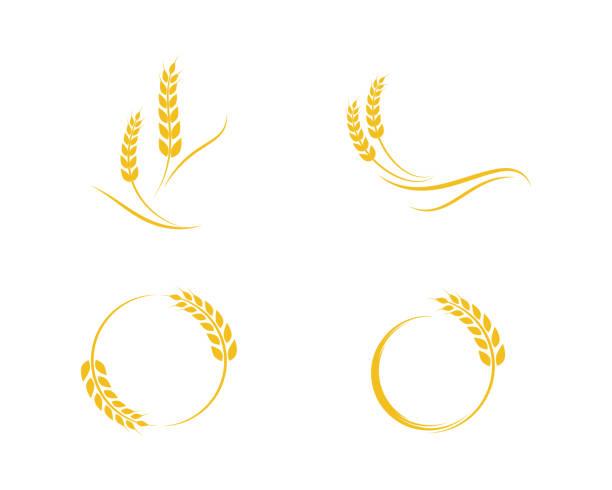 illustrations, cliparts, dessins animés et icônes de blé de l'agriculture modèle de logo - blé