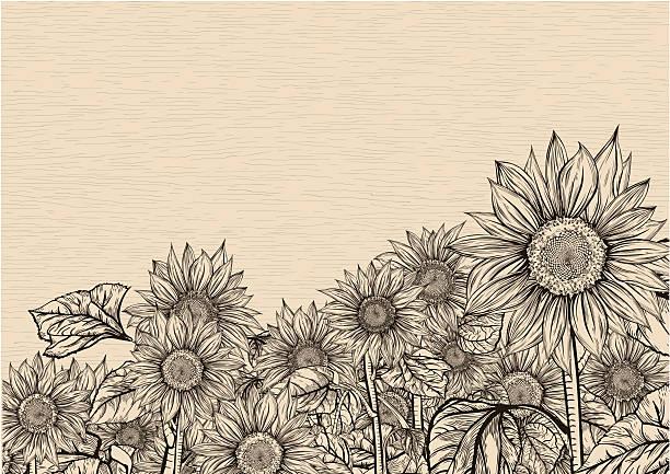 Aiming towards the sky. Sunflowers vector art illustration