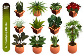 Air Purifying Plants Illustration. Coloured icon Illustration set of Air Purifying Plants Illustration). There are several air purifying plants icon such as Aloe Vera, Snake Plants, Lady Palm and so on.