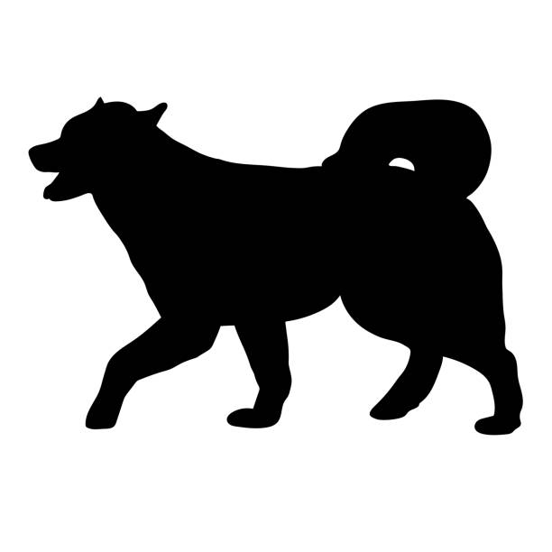 Alaskan Malamute dog Silhouette of a dog of breed Alaskan Malamute malamute stock illustrations