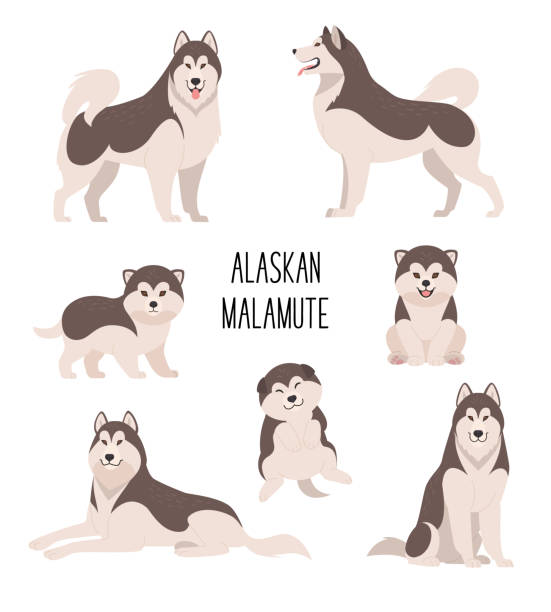 Alaskan malamute. Vector illustration of cartoon cute dogs and puppies in various poses. Isolated on white. malamute stock illustrations
