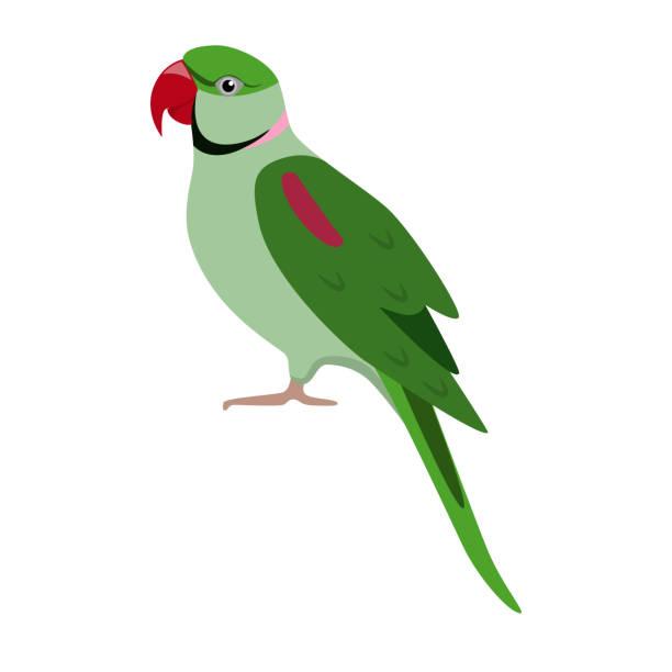 ilustrações de stock, clip art, desenhos animados e ícones de alexandrine parrot icon in flat style - arara
