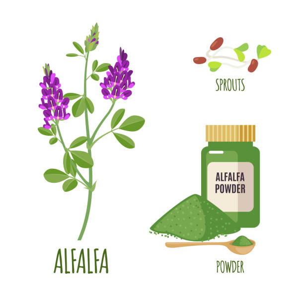 illustrazioni stock, clip art, cartoni animati e icone di tendenza di alfalfa set with powder and sproots in flat style. - erba medica
