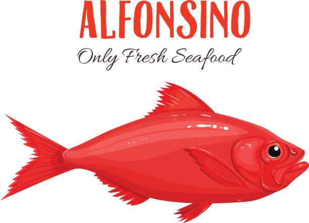 alfonsino fish vector illustration in cartoon style - redfish stock illustrations, clip art, cartoons, & icons