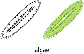istock Algae in colour and doodle on white background 1313225441
