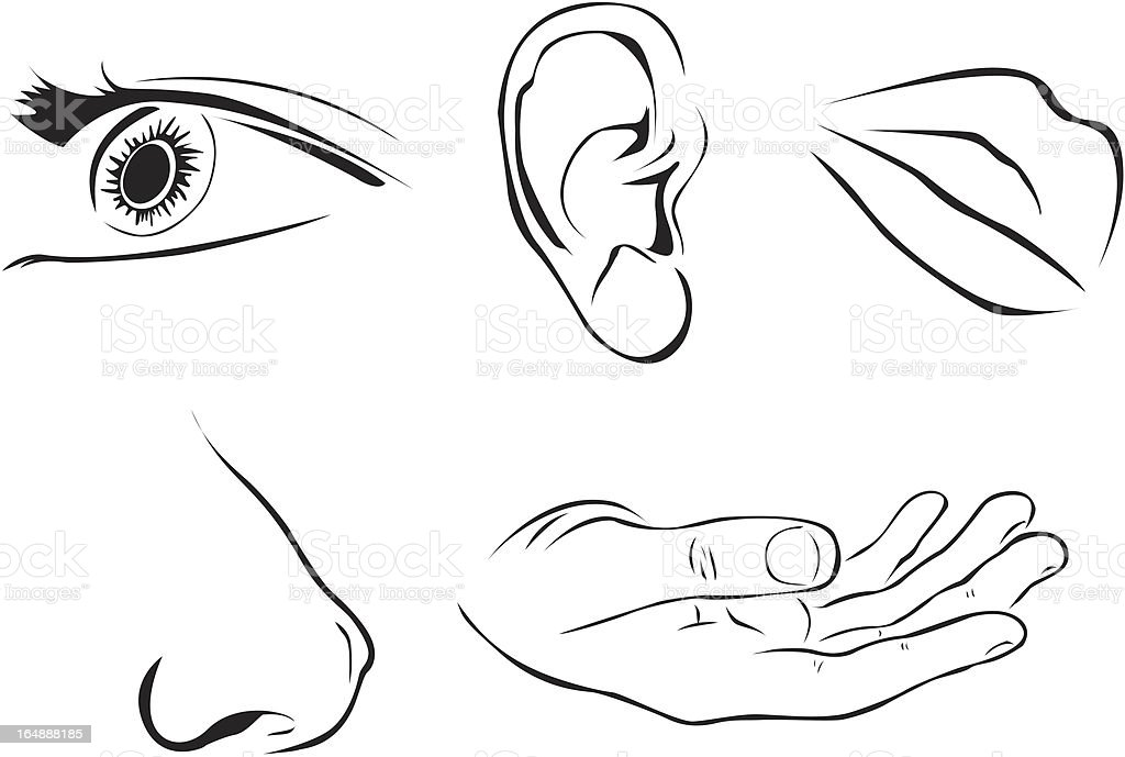 All five human senses are illustrated in black and white vector art illustration