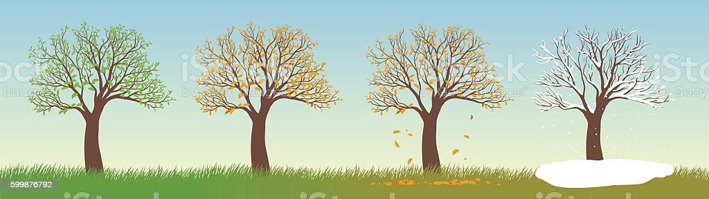 All Seasons Tree vector art illustration