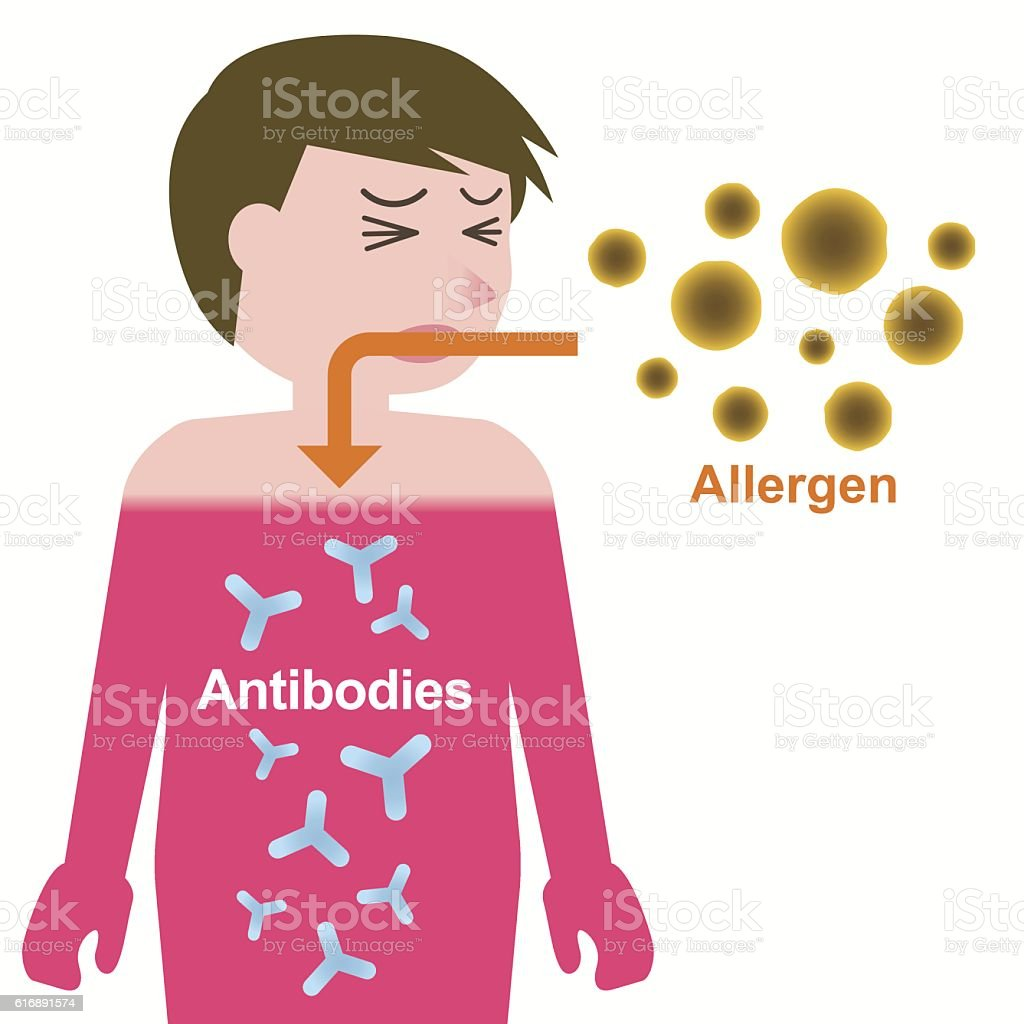 Allergen and antibodies, Mechanism of developing an allergy vector art illustration