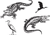 Hand drawn illustrations of American Alligators and Great Blue Herons.