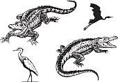 Cute baby Alligator, EPS10 vector