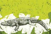 An American alligator over an abstract background. The background extends outside the square clipping mask. To edit, select the background and go to OBJECT-> CLIPPING MASK-> EDIT CONTENTS or RELEASE.