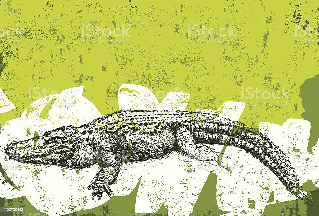 Fond grunge en alligator - Illustration vectorielle
