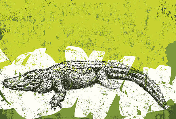 alligator grunge background - alligator stock illustrations