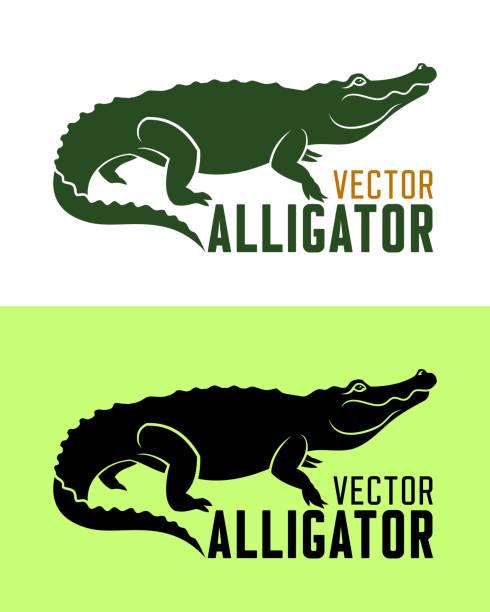 alligator silhouette vector illustration - alligator stock illustrations