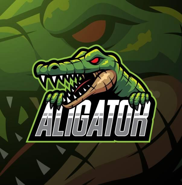 Alligator sport mascot logo design Illustration of Alligator sport mascot logo design alligator stock illustrations