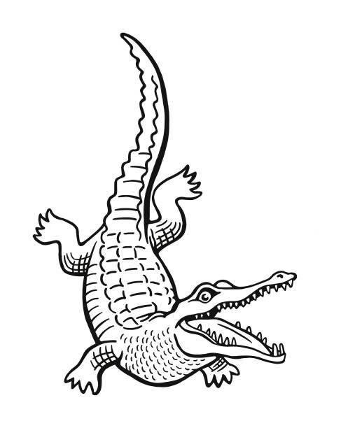 Alligator Alligator alligator stock illustrations