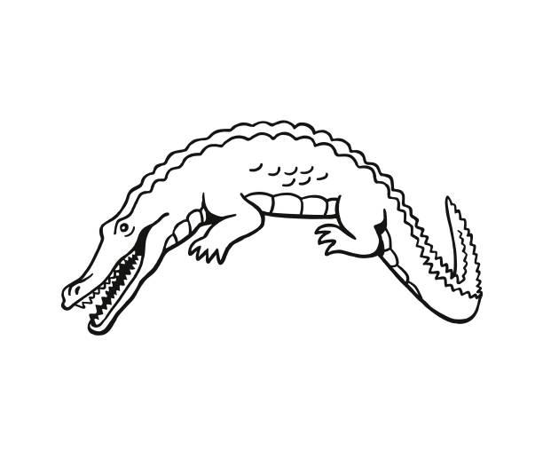 alligator - alligator stock illustrations
