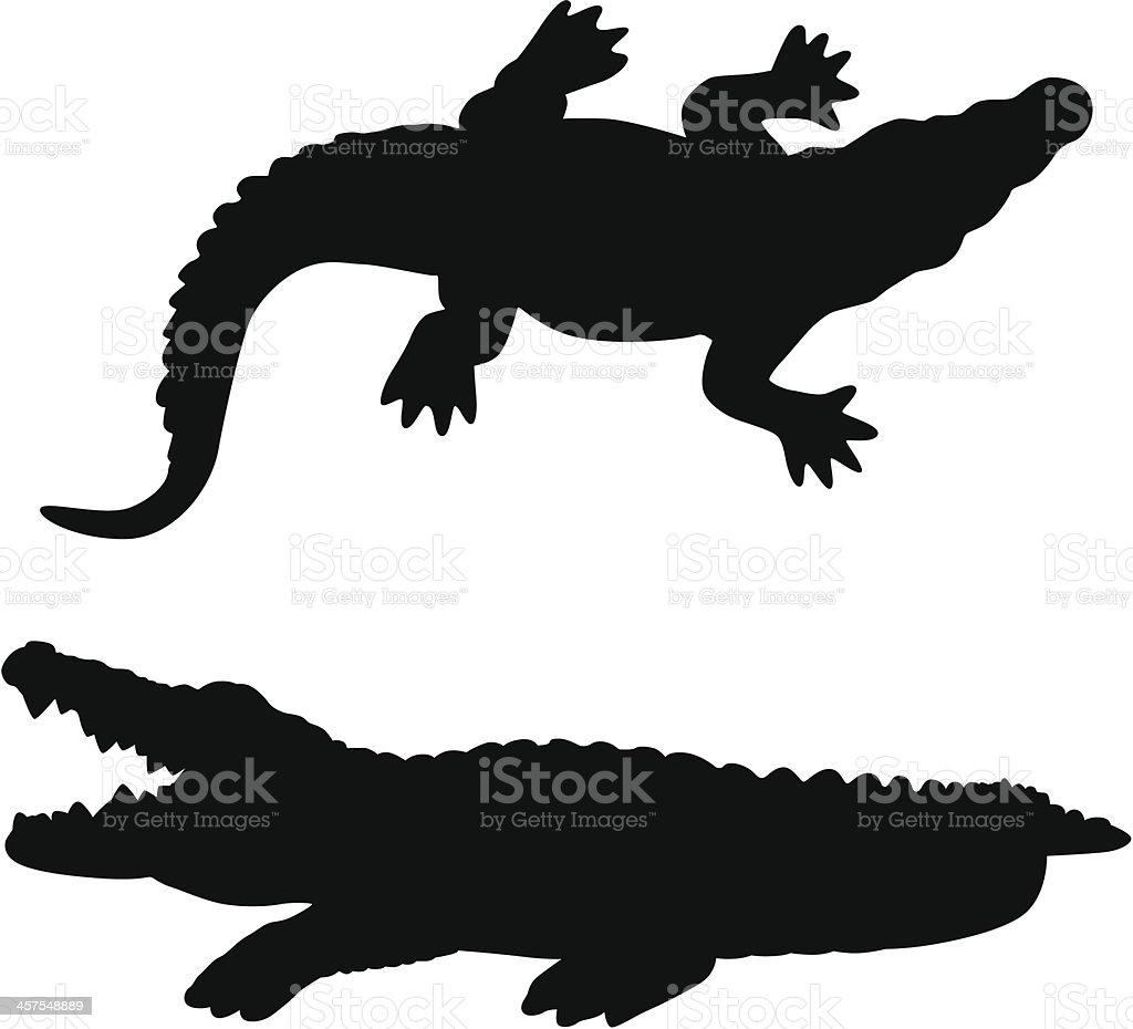 royalty free alligator clip art vector images illustrations istock rh istockphoto com clip art alligators free alligator clipart png