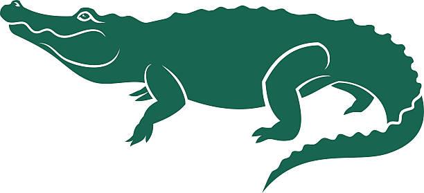 alligator - crocodile stock illustrations
