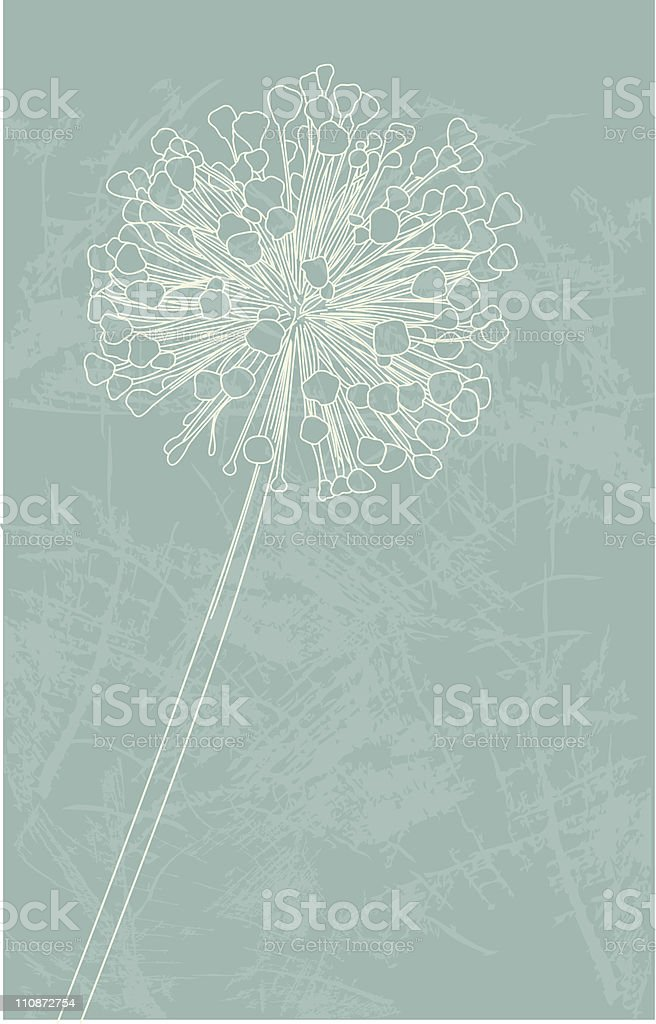 Allium Flower in Seed Stage vector art illustration