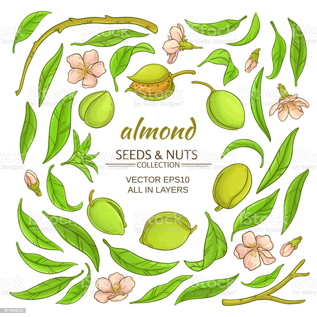 almond elements set vector art illustration