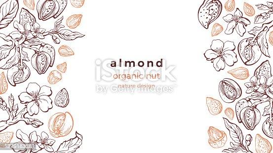 istock Almond nut frame. Vector art pattern. Farm harvest 1279183381