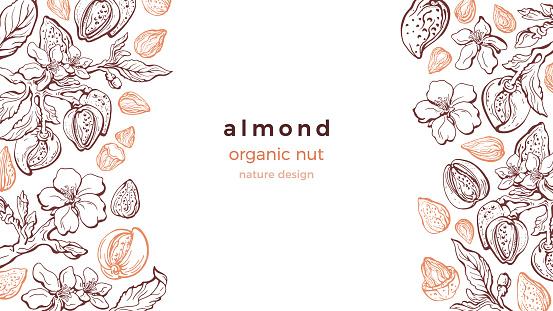 Almond nut frame. Vector art pattern. Farm harvest