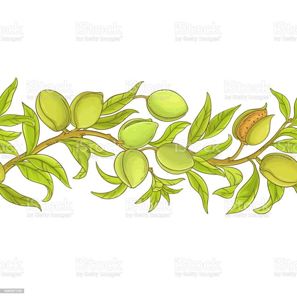 almond vector pattern vector art illustration