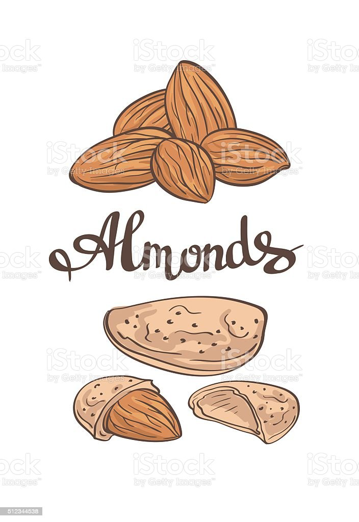 Almonds.Hand drawn  Vector illustration. vector art illustration